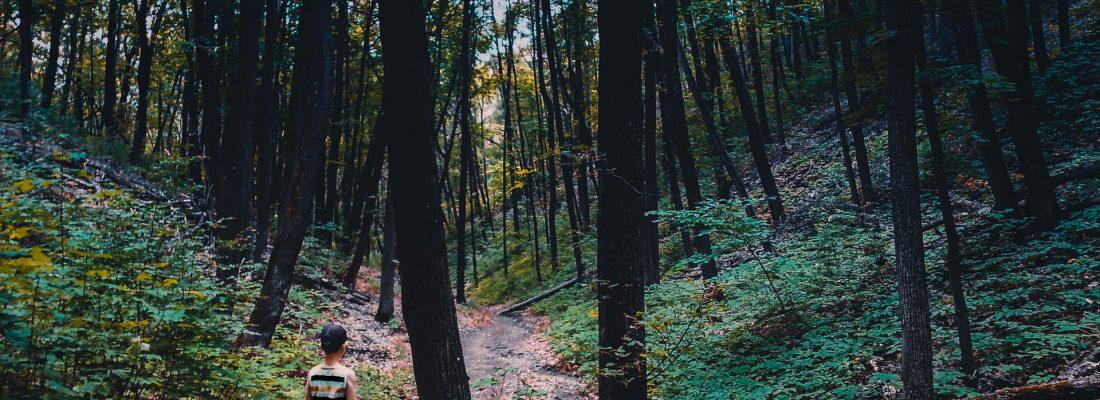 samotne dziecko w lesie